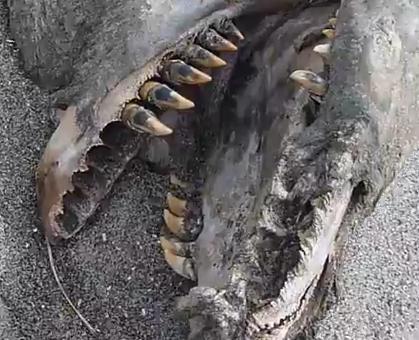 I denti dell'animale