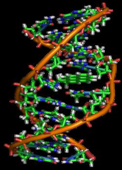 Struttura Gene F1SH di tipo A1
